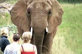 elephant-and-people