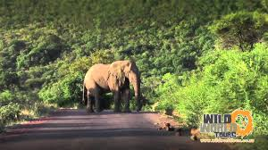 elephant-in-bush