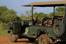 game-drives